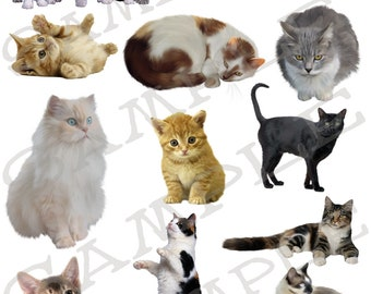 Cats and Kittens 1 Jpeg and PNG images