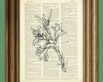 Study of Lily Flower from Leonardo DaVinci sketch on vintage dictionary page book art print Da vinci