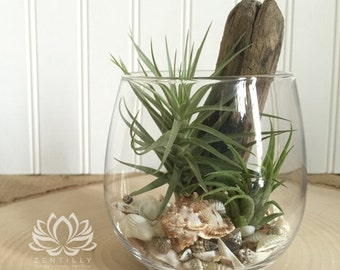 Stemless Wine Glass Tillandsia Terrarium by Zentilly©