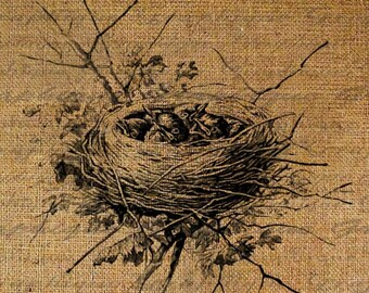 Nest Baby Bird Birds Adorable Digital Image Download Transfers To Pillows Totes Tea Towels Burlap No. 1585