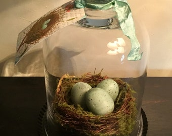 Vintage Glass Cloche with mossy Bird nest and Robin's eggs