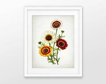 Flower Art Print - Antique Plant Illustration - Botanical Flower Art - Botanical Print - Single Print #1790 - INSTANT DOWNLOAD