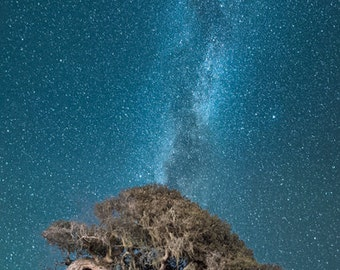 Night Visions at Fort Ord - monterey,oak tree,midnight,milky way,bending over,night,stars,home decor,office decor,vertorama,earth tones,blue