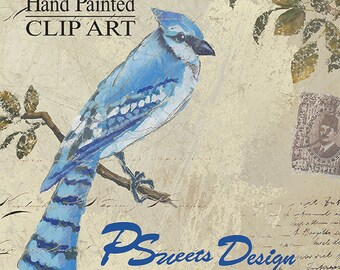 Bluejay Clipart, Hand Painted Clipart