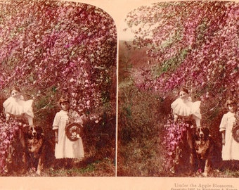1897 Woman, Girl and Dog Under the Apple Blossoms. Hand Colored Stereoview Photo