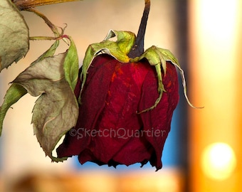 Withered Red Rose, Art, Photography, Home Decor. Nature Photography, Stock Photography, Instant Download, Wall Art, Nature Lover Gift