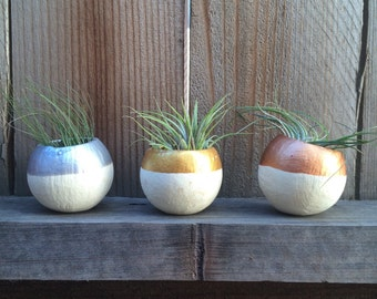 Air Plant Pod 3 pack - metallics