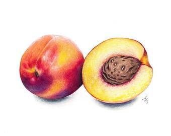 Peach Art Print, Peach, Realistic Art, Nectarine, Kitchen Art, Fruit Art, Fruit, Foodart, Food Art