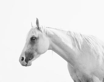 White Horse Art Print | Black and White Animal Photography