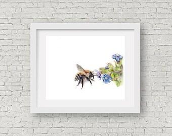 Bee print, bee illustration, honey bee print, Bee coloured pencil illustration, bee keeper gift, animal lover gift, 9x11 print