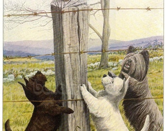 1919 Print Scottish Terrier West Highland and Skye Terrier Dogs Chase Cat Up a Fence by Louis Agassiz Fuertes