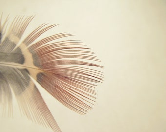 Feather Nature Photography Rustic Minimalist Neutral 10x8 Print So Fine