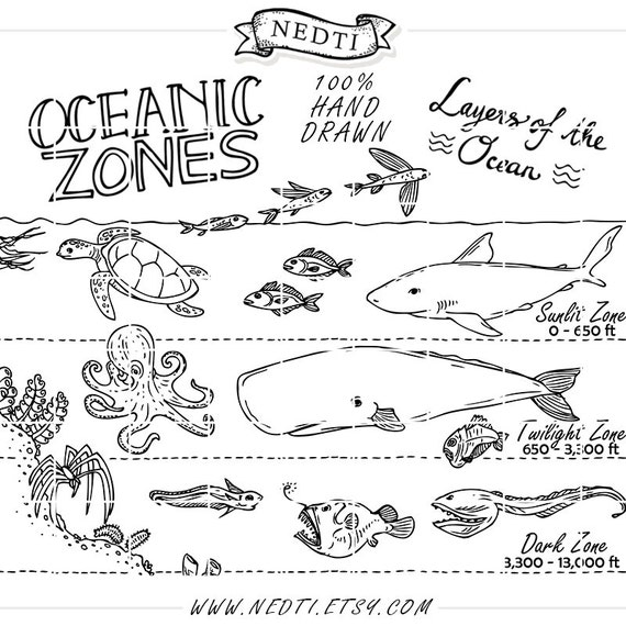 oceanic zones educational clipart earth science hand drawn new holland coloring pages educational animal coloring pages