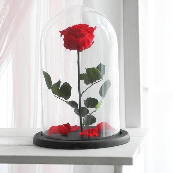 belle et la b te rose enchanted rose rose en d me de verre. Black Bedroom Furniture Sets. Home Design Ideas