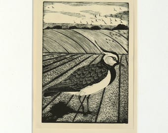 Vintage bird print, 'Lapwing' by Eric Fitch Daglish 1926 framed in black