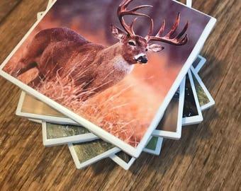 Custom photo tile coasters (Wildlife set of 6)