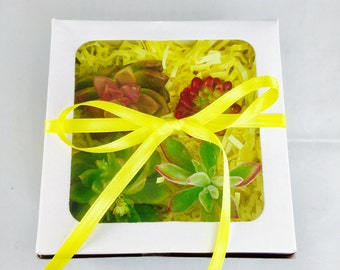 Mothers Day Succulent gift box birthday gift succulent gift for mom gift teacher gift coach gift retirement office Sympathy gift box