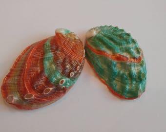 Teal Abalone Shells - 2 Teal & Brown Abalone Seashells - Kamstcha Polished Shells #105
