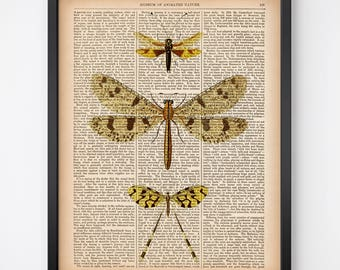 Insect printable art, Wall art vintage, Dictionary art print, Spoonwing, Lacewing fly, Owl fly, Ant lion, Instant download print, Antique