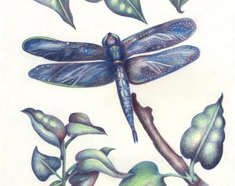 Dragonfly with Lilac Leaves Notecard