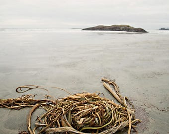 Photography print: photograph, Tofino, beach, sea kelp, nature photography, ocean, fine art print