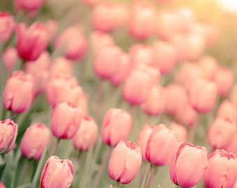 Pink Tulips, Flower Photography, Nursery Wall Art, Botanical Decor, Nature Photography, Blush Pink, Light Green, Spring Tulip, Garden Home