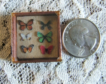 12th Scale Butterfly Specimen Box Dollhouse Miniature