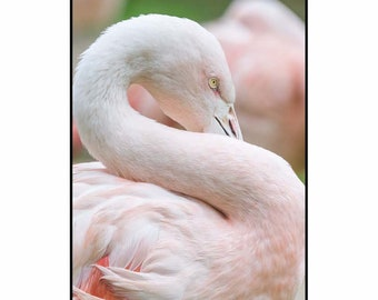 Flamingo, Photography, Wall art, Poster, Print, Instant Download
