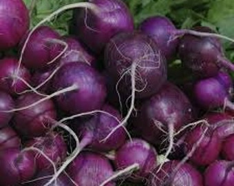 PURPLE PLUM RADISH seeds, gardening seed pack
