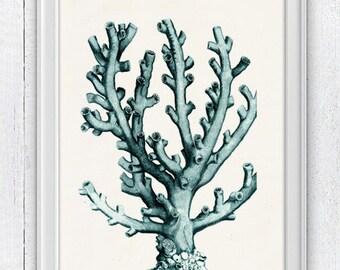 Coral in seafoam n04- sea life print - Antique sealife Illustration -  Marine  sea life illustration A4 print SWC050