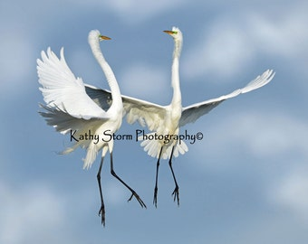 Great Egrets, Florida, birds, wildlife photography,  Wedding or Anniversary,     Wall art, home décor.   FREE SHIPPING!