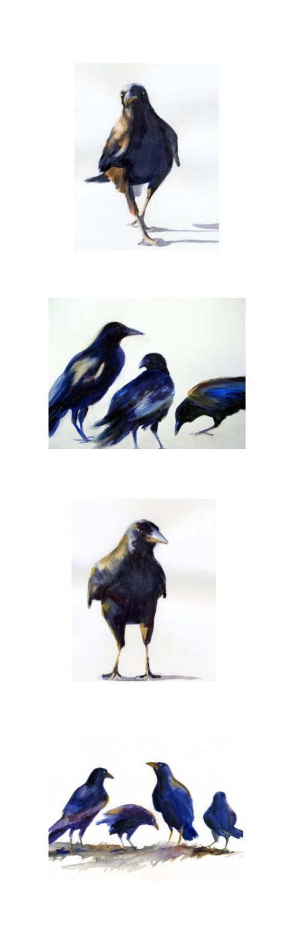 8x26 - 4 crow and raven signed prints - confident crow series