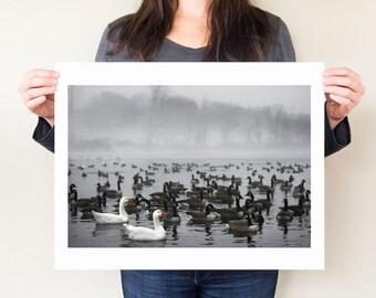 Monochrome print, birds artwork, Snow geese photo, misty winter landscape photo, bird photography, nature artwork, upstate new york wall art