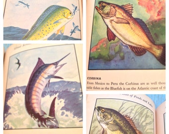 ANTIQUE FIRST EDITION A Book of Fishes Amazing Illustrations Throughout Author S. Kip Farrington Jr. and Lynn Bogue Hunt 1946