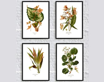 Lovely botanical print illustration flowers leaves plants vintage home decor wall art print SET of 4 pink green poster begonia beautiful