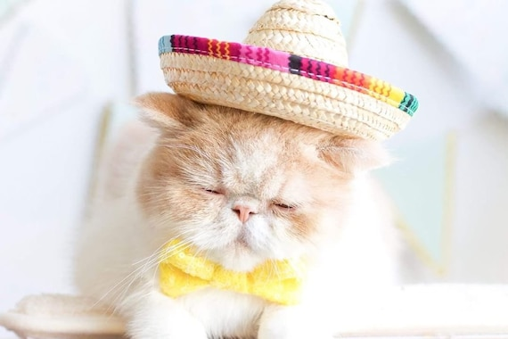 Sombrero + Bow Tie || Mini Sombrero || Dog Hat || Straw Hat || Mini Sombrero ||  Fiesta Party || Fiesta Hat