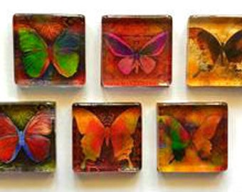 Magnets - Butterflies - Butterfly - Set of 6 - 1 Inch Glass Squares - Free U.S. Shipping -