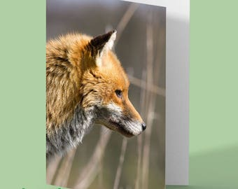 Fox Greeting Card - fox blank card - fox photo - personalised card - fox photograph - any occasion card - red fox - greetings card