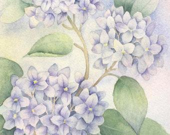 Hydrangea Painting, Watercolor Art Print, Hydrangea Art Print, Blue Hydrangea Watercolor Print