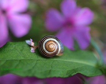 Come Out of Your Shell, snail photograph, blank card, write your own message, nature print