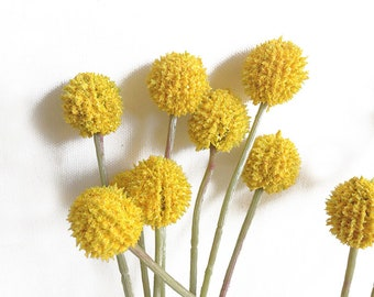 6 Faux Billy Balls, Craspedia, Billy Buttons, yellow flower, yellow bouquet, yellow wedding, yellow button, round yellow flower, yellow ball