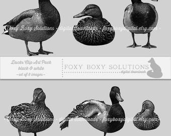 Black & White Ducks: Clip Art, set of 6 images