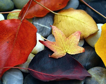 Autumn Leaves Fine Art Photography  Fall Colors River Stones  Nature Inspired Home Decor  Office Wall Art  fpoe