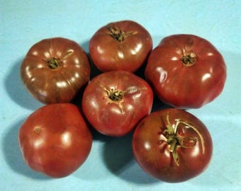 Spudakee Tomato Heirloom Garden Seed Non-GMO 30+ Seeds Naturally Grown Open Pollinated Gardening