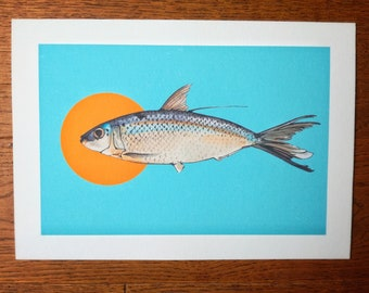 Limited Edition (1/50) Giclee Print (A4) - Curious Fish