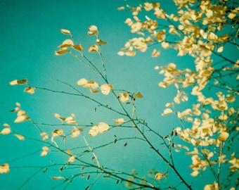 Colorful Art Print - Aqua Turquoise - Yellow Leaves - Leaf Photography - Leaf Print - Abstract Art - Nature Photography - Dreamy Photography