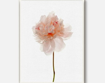 Peony Art, Peony Print, Flower Photo Print, Printable Wall Art, Peony Flower Art, Instant Download, Floral Art, Botanical Photo, Digital Art
