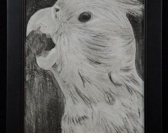 Talking Bird - An original, framed charcoal and chalk drawing