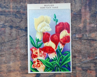 Original Vintage Flower Seed Label, Lithograph, French, Snapdragon, New Old Stock
