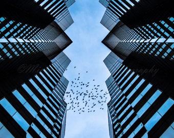 Columbus Birds